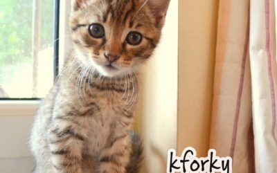 KFORKY